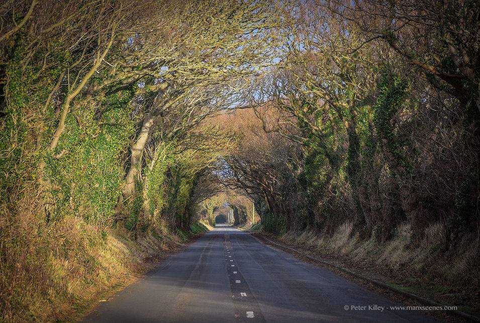 Tree Tunnel © Peter Killey - www.manxscenes.com