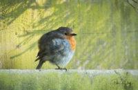 Round Robin - © Peter Killey - www.manxscenes.com