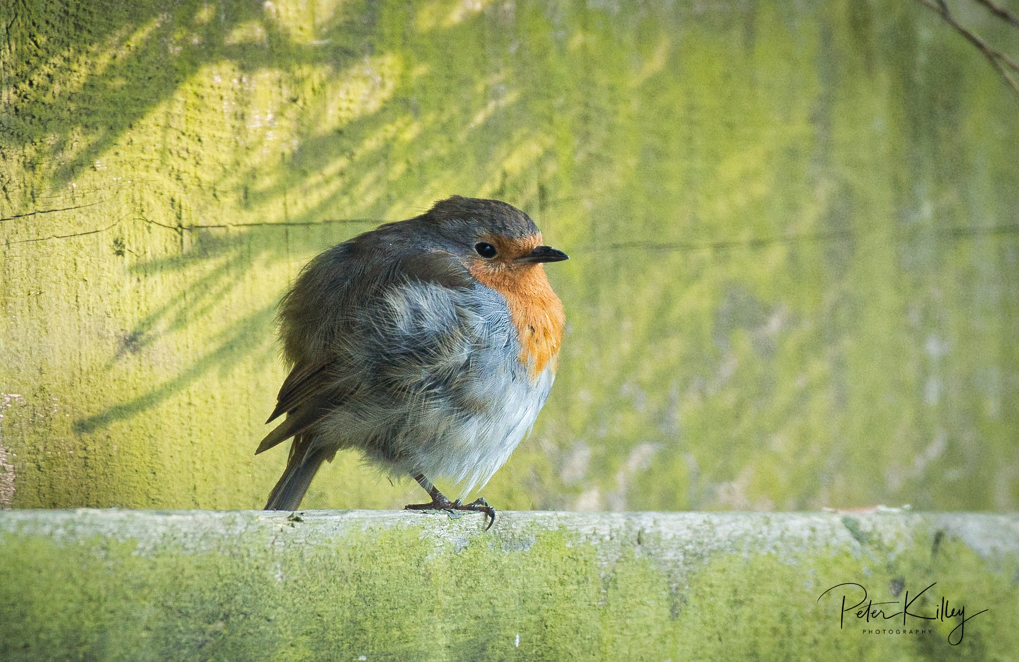 Round Robin - © Peter Killey - www.manxscenes.com