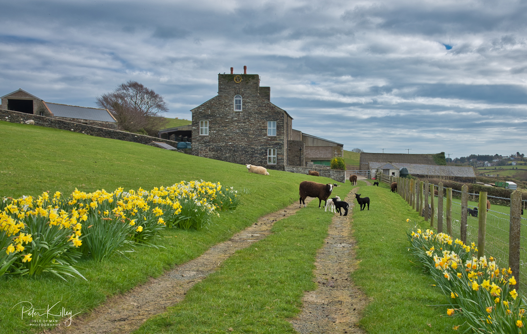 Ballaterson Farm, Maughold - © Peter Killey - www.manxscenes.com