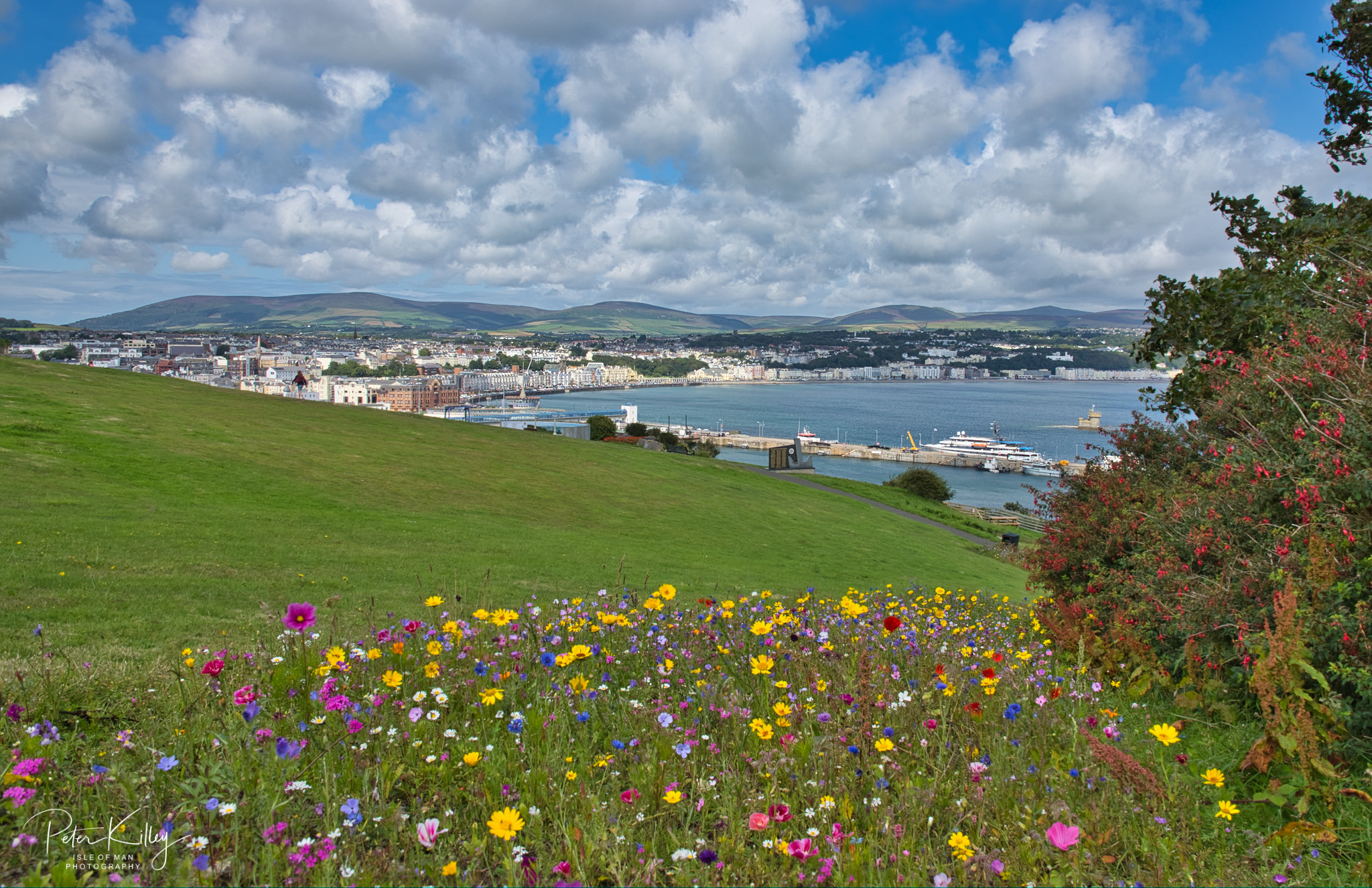 Douglas Head Wildflowers -  © Peter Killey - www.manxscenes.com