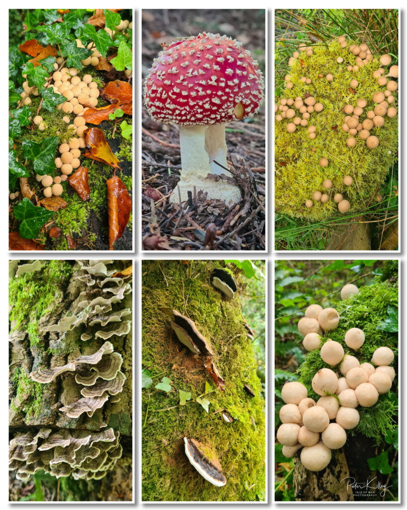 Autumn Fungi © Peter Killey - www.manxscenes.com