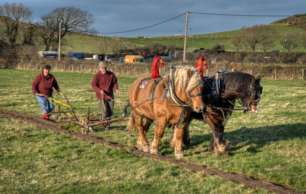 Ploughing old Isle of Man style - © Peter Killey - www.manxscenes.com