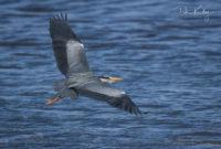 Heron Langness